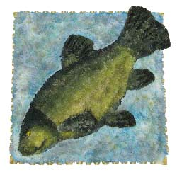 Bespoke Fish Tribute - Tench