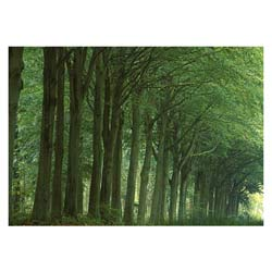 Avenue of Trees Card