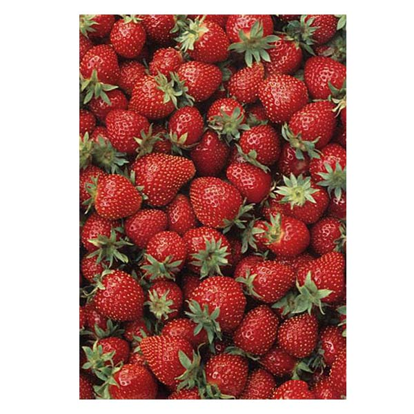 PhotowrapStrawberries Greeting Card