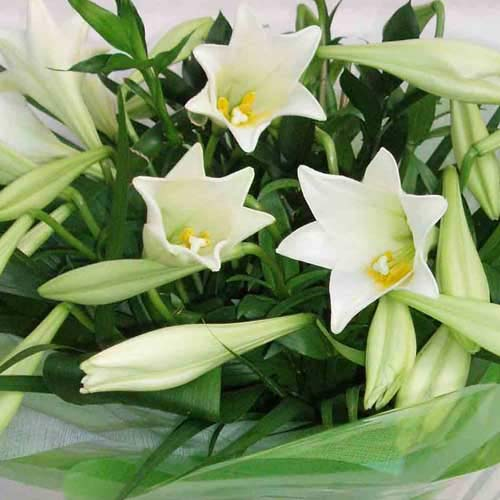 Flower Delivery White Longiflorum Lily