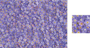 Forget-Me-Not Wrapping Paper - Photowrap