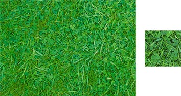 Lawn Grass Wrapping Paper - Photowrap