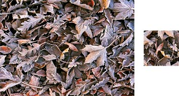 Leaf Frost Photowrap Wrapping Paper